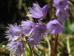 Blumen im Berggasthaus Plattenbödeli