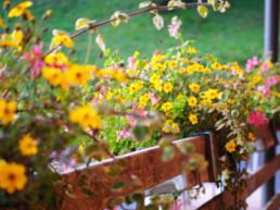 Plattenbödeli Blumen